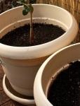 Plastic Pots 1