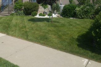 Beautifully landscaped, cut and cleaned
