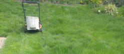 cropped-poor-little-mower-working-so-hard.jpg