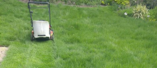cropped-poor-little-mower-working-so-hard.jpg