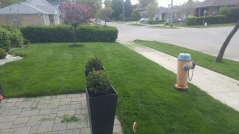 Freshly Cut...Time to get the blower out