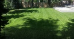 Lovely Lawns 2