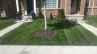 Well maintained and structured tiny front yard